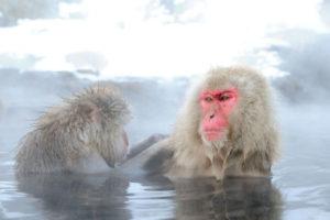 snow_monkey02